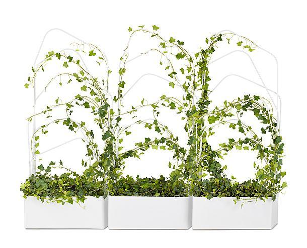 снимка на растения за катерене