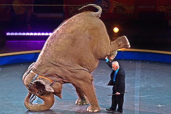 slagalica o slonu za djecu