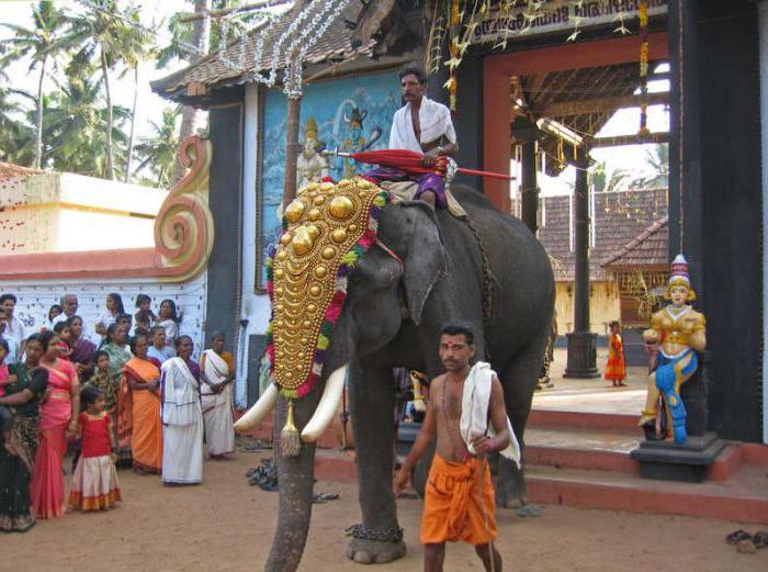 zagonetke o slonu