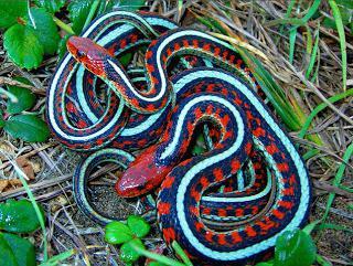 Što sanja o zmijama