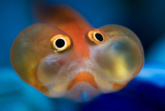 Зашто сањаш рибу
