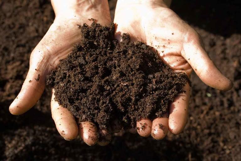 Wybór gleby