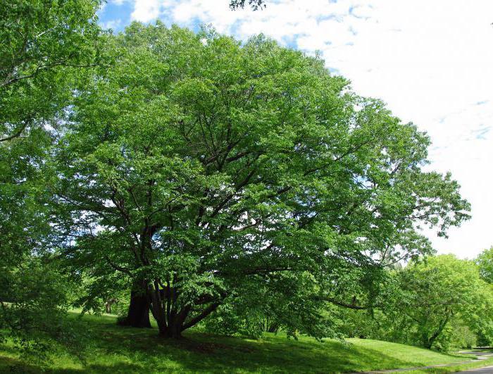 Schmidt breza