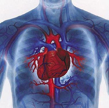 corda extra nel cuore