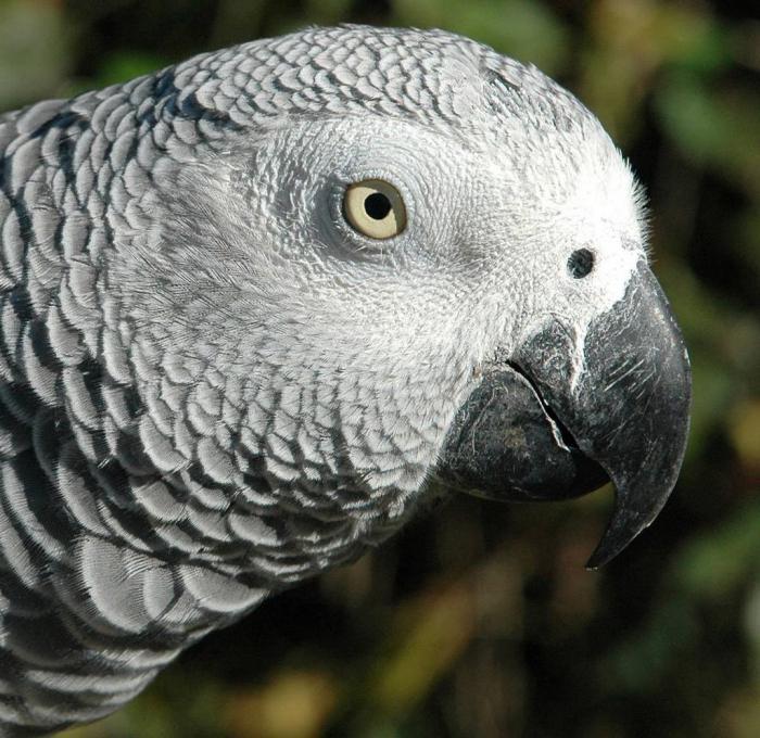 Parrot Jaco fotografija