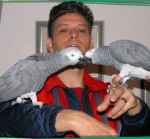 jaco papagaj kod kuće