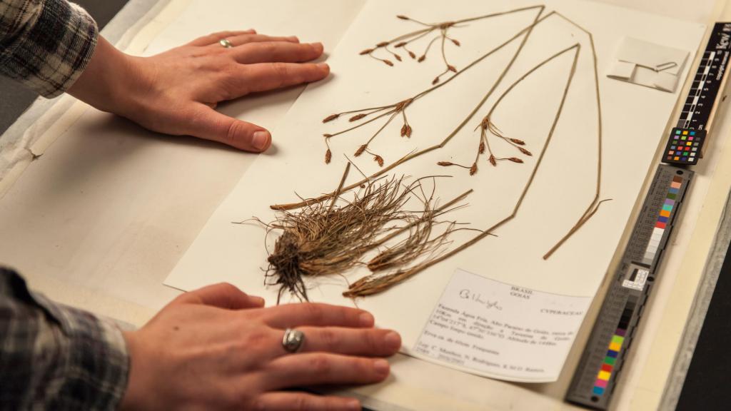 Herbárium ze zahrady Kew