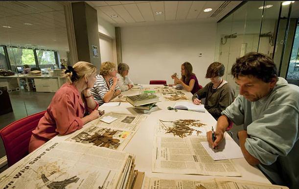 Práce v knihovně Kew Gardens