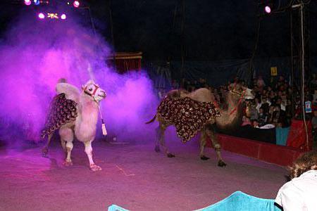 Киевска циркова палатка