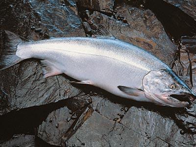рецепти за печене на риба във фурната