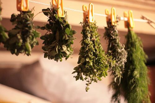 applicazione erba poligono