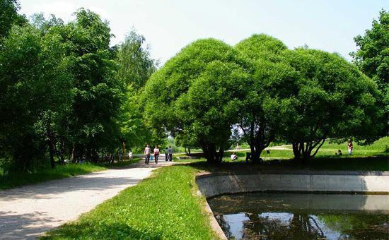 Коломна Парк Скуаре