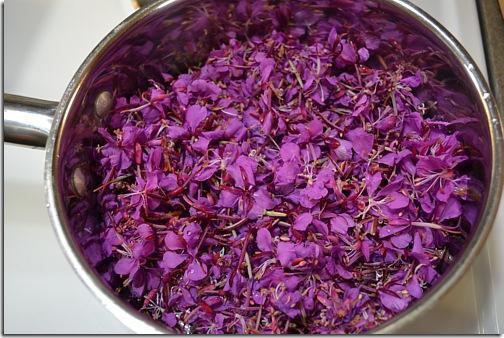 Benefici del tè Kopor