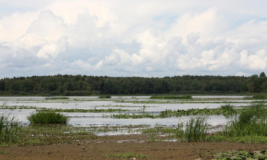 Suha obala rezervoarja Kostroma