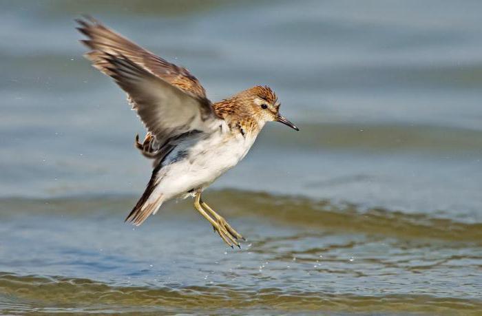 cibo sandwich per uccelli