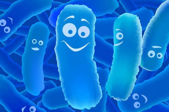 smanjene su bakterije mliječne kiseline