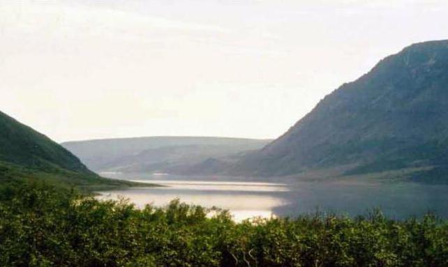 jezerní štika fotografie
