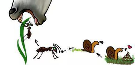 ciclo vitale di lancet fluke