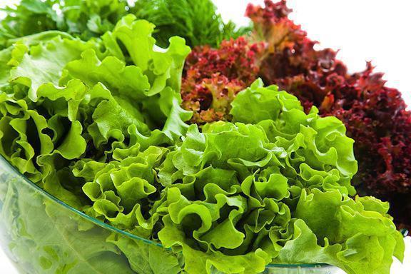 korisna svojstva listne salate