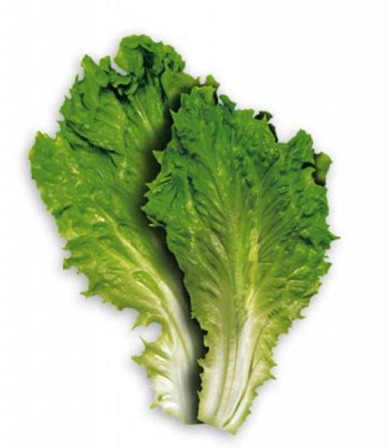 što je korisno lišće salata