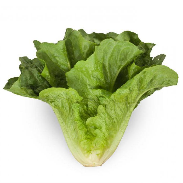 svojstva salate