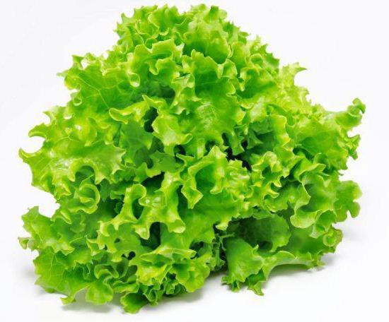recepti za salatu