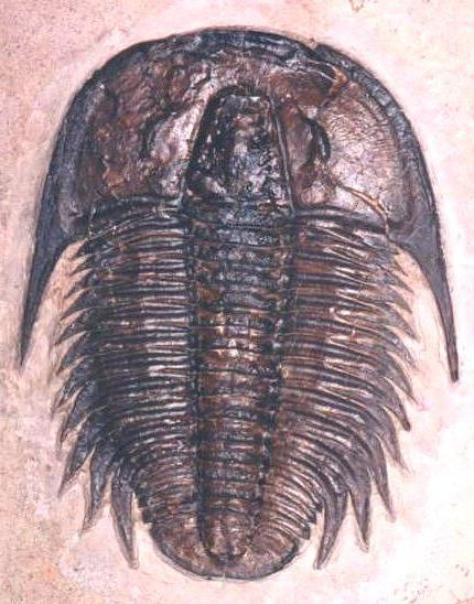 Tavola dei periodi dell'era paleozoica