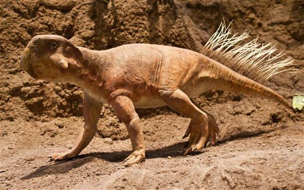 Piante di epoca paleozoica