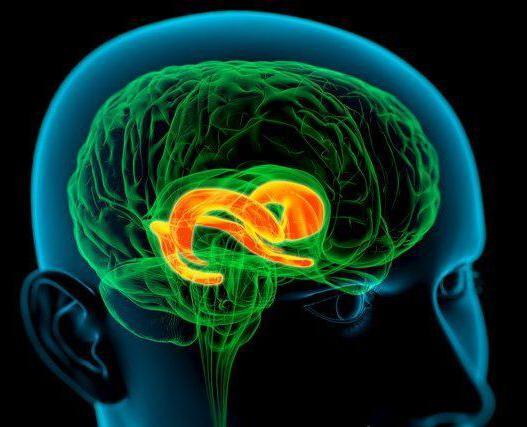 лимбична система на мозъка