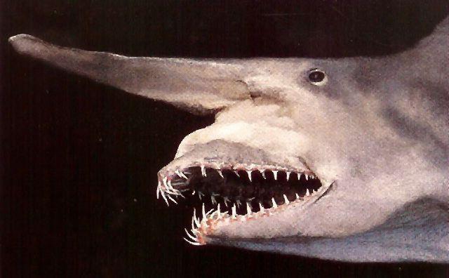 goblin rekina