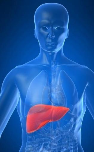 ремонт на черния дроб