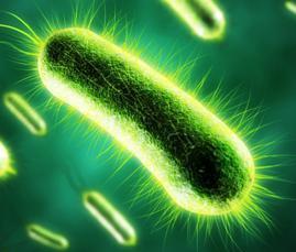 questione delle cellule viventi