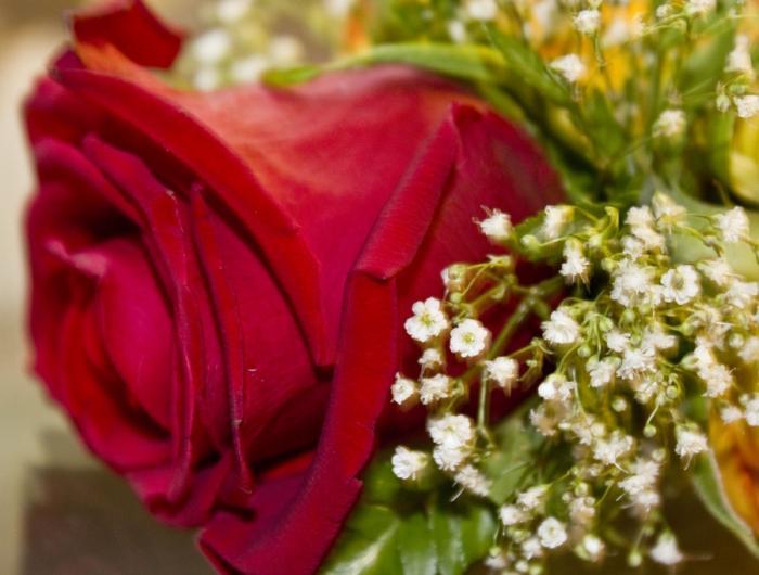 fiori del libro dei sogni