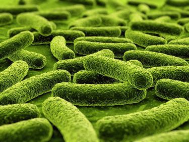 definizione di tubercolosi
