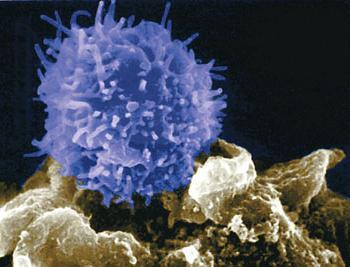 tasso di linfociti