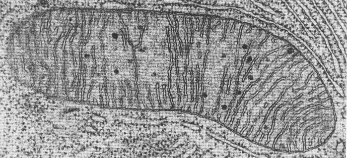 struktura lysosomových organoidů