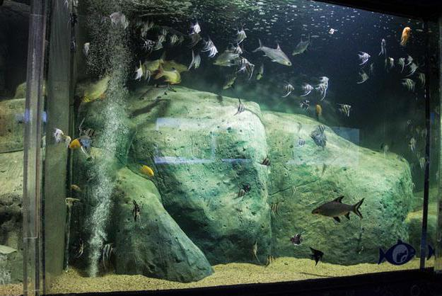 Адрес на аквариума в Казан