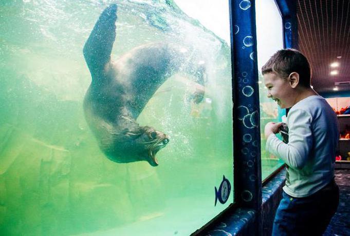 Казански аквариумни ревюта