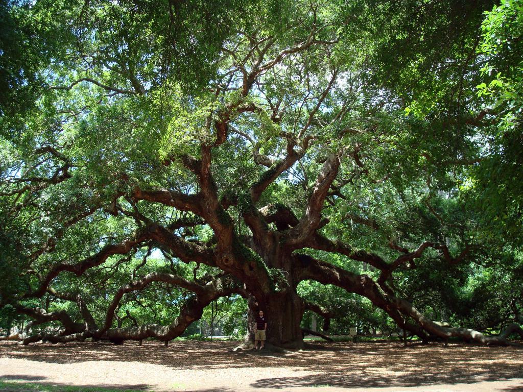 Oak darà energia all'Ariete