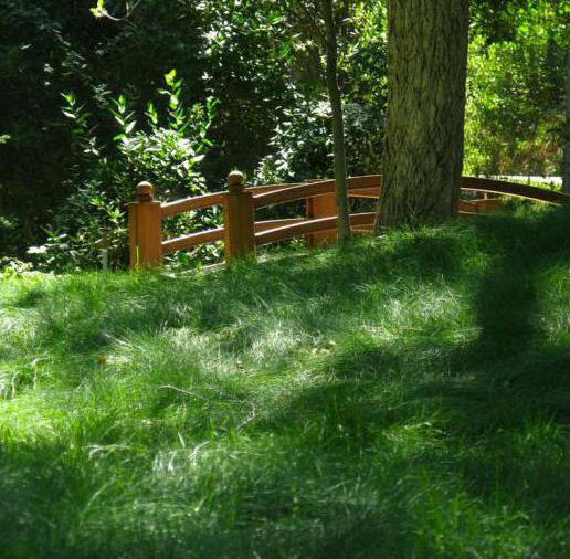 ливадска трава