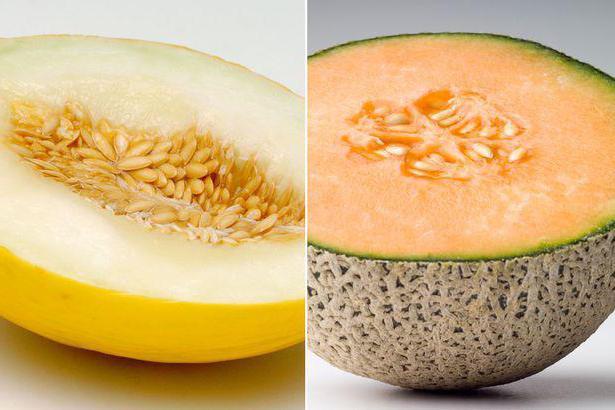 Dieta di melone