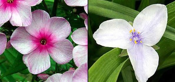 Monokotiledonske i dvosupne biljke