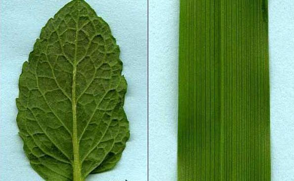 Znakovi monokotilnih biljaka