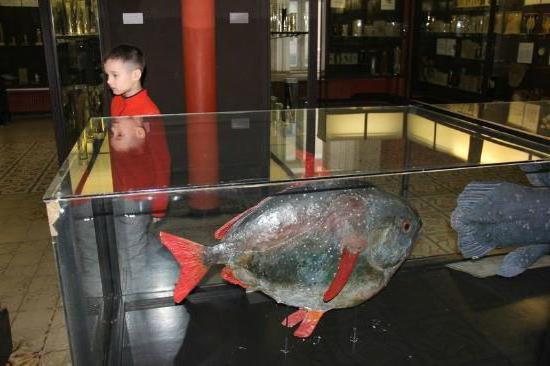 Zoološki muzej Moskovskog državnog sveučilišta nazvanog po Lomonosovu