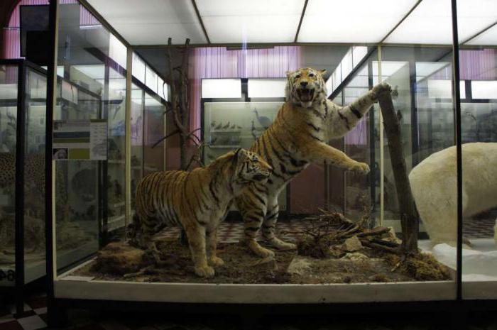 prvi ravnatelj zoološkog muzeja