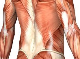 syndrom svalového tonika bederní páteře