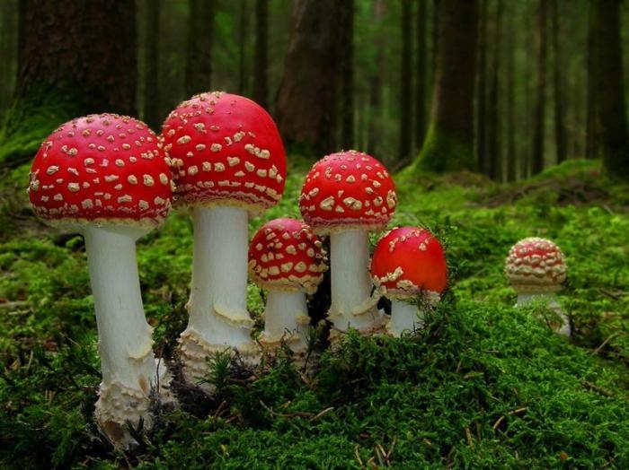 sní o sběru hub
