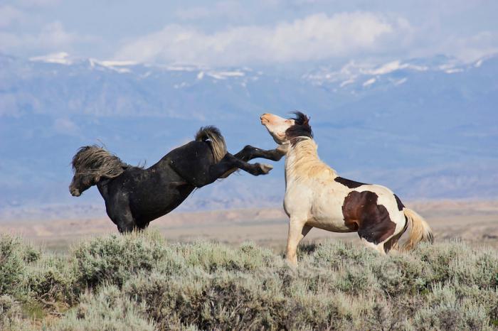 foto di cavallo mustang