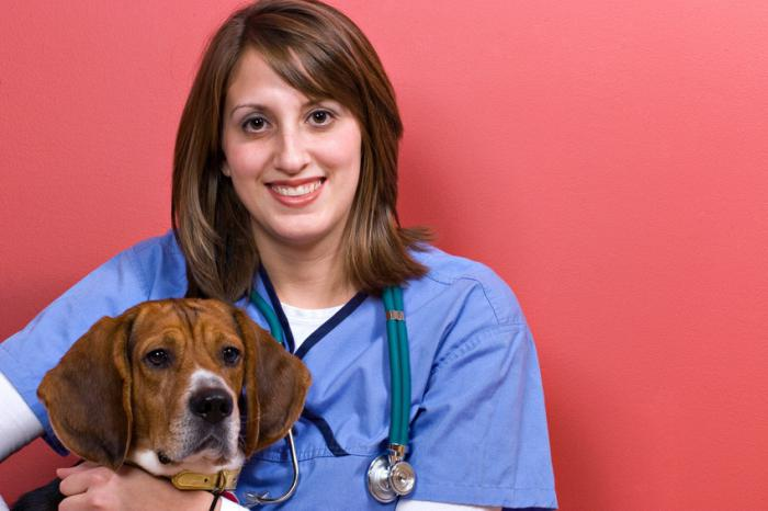 micoplasmosi nei sintomi del cane