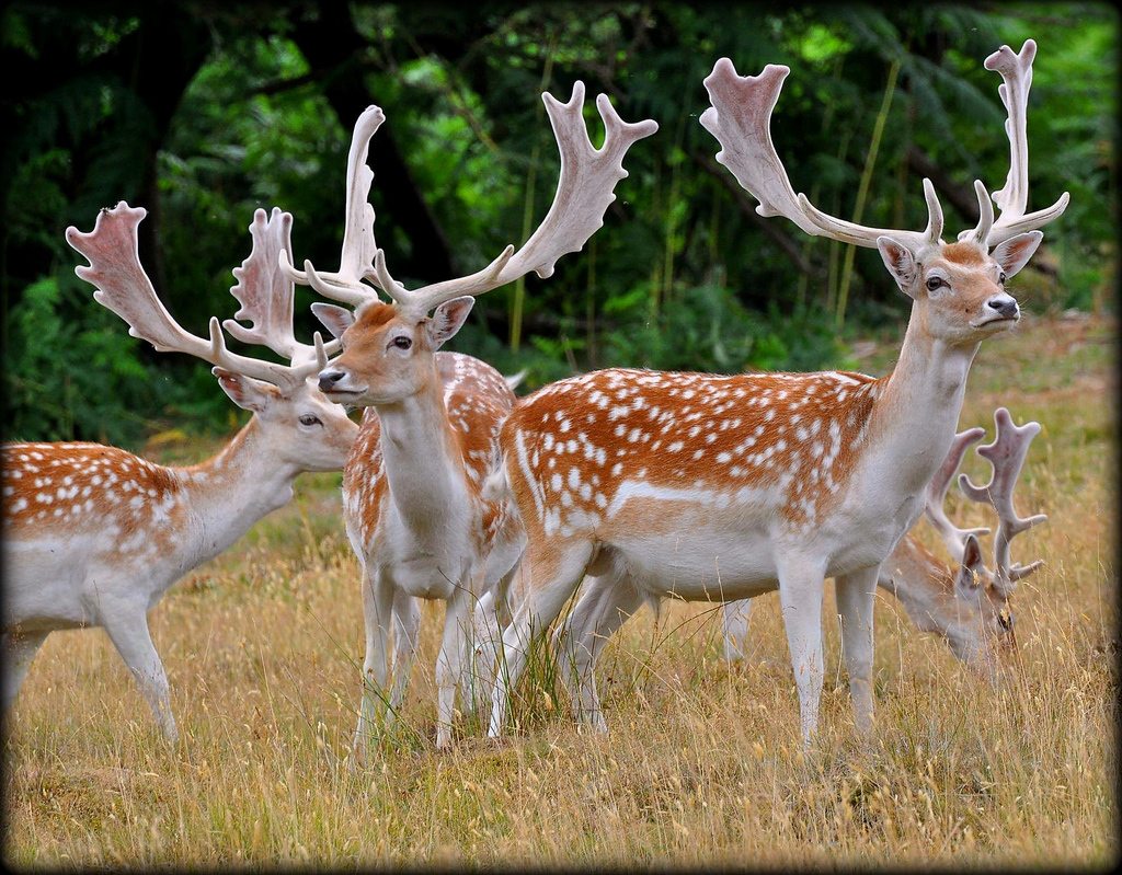 Zagonetke o jelenu za najmanju